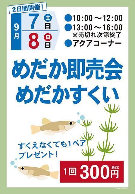 20190907-08_makita_medaka_800_shikisai.jpg