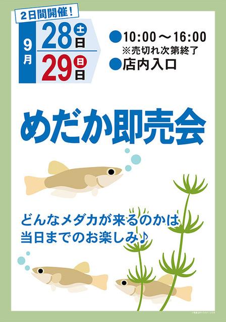 20190928-29_medakasale_800_shinako.jpg