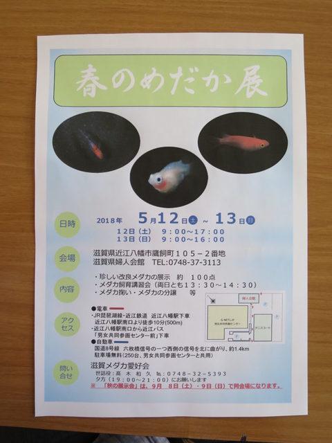 IMG_0011-768x1024.jpg