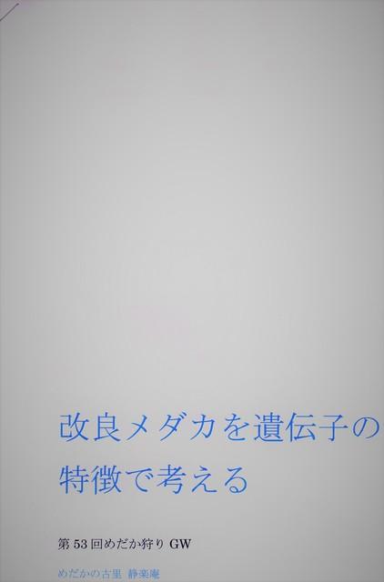 img017 (2).jpg
