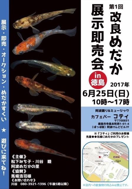 kairyoumedaka tokushima.jpg